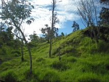 Green Grassy Hill Under a Cloudy Blue Sky. On the Big Island, Volcano, Hawaii Royalty Free Stock Photography