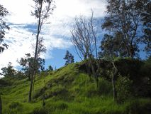 Green Grassy Hill Under a Cloudy Blue Sky. On the Big Island, Volcano, Hawaii Stock Photo