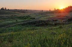 Green grassy hills with small distant trees in summer sunrise Royalty Free Stock Photo