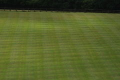 Green grassy lawn. Mowed in a criss-cross pattern Stock Images