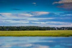 Green Grassy Marsh in the Morning Royalty Free Stock Photos