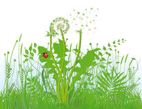 Green grassy meadow. Illustration of a green grassy meadow with a white background Royalty Free Stock Photography