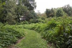 Green grassy path through meadow royalty free stock photos