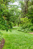 Green Grassy Path Through Park stock images