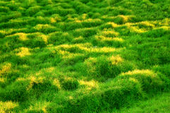 Green Grassy Slope Stock Photography