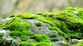 Green grassy stone Stock Images