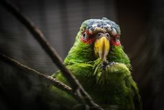 Green and Gray Bird Screenshot Royalty Free Stock Photography