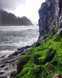 Green on Gray. Blumenthal falls on the Oregon coast. This moss and ocean was in it's prime Royalty Free Stock Images