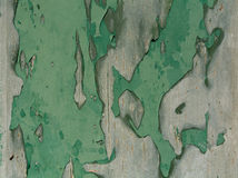 Green gray wood texture. Green colored wood texture. Abstract background Royalty Free Stock Images