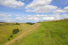 Green grazing valley Royalty Free Stock Photo