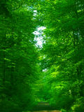 Green green forest royalty free stock photography
