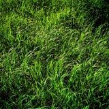 Green green grass Stock Image