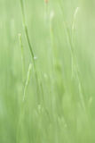Green green grass, on the forrest floor, shining in the summer sun Royalty Free Stock Photo