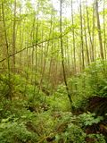Green, green, green. A beautiful shoot of the woods in Washington with nice lighting Royalty Free Stock Photos