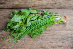 Green: green onions, dill and basil royalty free stock photos