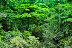 Green green tropical forest Royalty Free Stock Photography