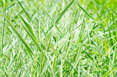 Green gress background Royalty Free Stock Photos