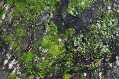 Green and grey moss background Stock Photo
