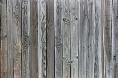 Green Grey Tinted Wood fence background unique grain. Green tinted wood fence background. Boards show unique grain knots Royalty Free Stock Photography