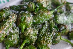 Green grilled peppers padron with coarse salt on white plate. Spanish cuisine background. Grilled pimientos closeup. Homemade peppers. Healthy dinner concept royalty free stock images