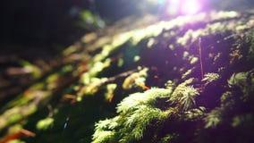 Green. Groene mos met schittering in het bos Royalty Free Stock Photo