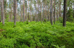 Green ground in a bright forest Royalty Free Stock Photography