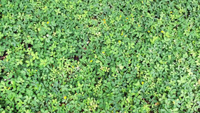 Green ground Royalty Free Stock Image