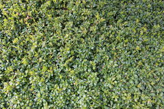 Green ground deck plants royalty free stock image