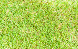 Green ground grass Royalty Free Stock Images