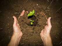 Green ground hands Stock Photography