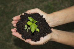 Green ground hands Royalty Free Stock Photography