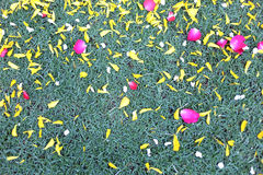 Green of ground lawn with flower petals campsites are. Stock Photography