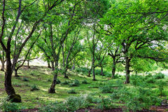 Green grove Stock Photos