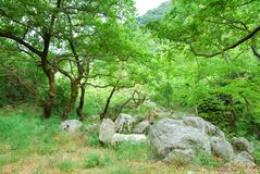 Green grove with big boulders Royalty Free Stock Photography