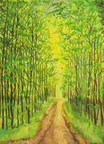 Green grove. The footpath in the summer grove Royalty Free Stock Photo