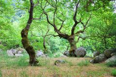 Green grove with old trees Stock Photography