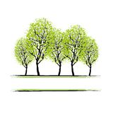 Green grove with trees for your design Stock Photos