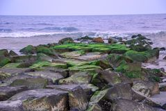 Green on rocks on the Atlantic Ocean stock image