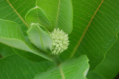 Green growth. Close up of green bud and plant Royalty Free Stock Photography