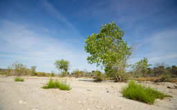 Green Growth in Desert Royalty Free Stock Photos