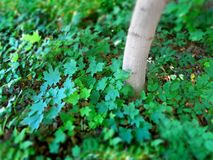 Green growth tree and plants with narrow focus Stock Photo