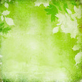 Green grunge background with leaves Stock Photography