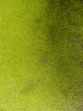 Green grunge dirty worn wall Royalty Free Stock Photography