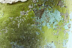 Green grunge home background Royalty Free Stock Photography