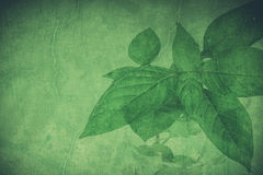 Green grunge leaf  background. Stock Photo
