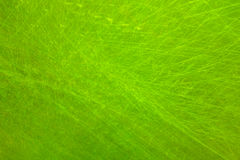 Green grunge. Spring abstract backgrounds, green grunge Stock Photos