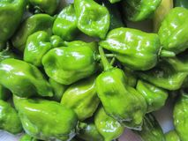 Green Habanero Peppers Capsicum. These are home grown green habanero peppers, Capsicum, a very hot pepper used for spicing food royalty free stock image