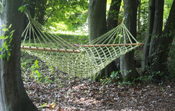 Green hammock in the wood Stock Photos