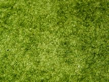 Green handmade paper Royalty Free Stock Image