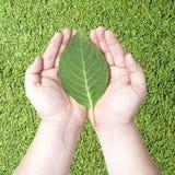 green hands den mänskliga leafen Fotografering för Bildbyråer